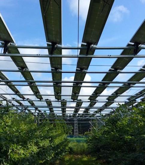 農園ソーラーシェアリング